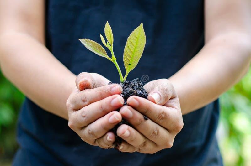 Dans les mains des arbres cultivant des jeunes plantes Bokeh verdissent la main femelle de fond tenant l'arbre sur la conservatio photo libre de droits