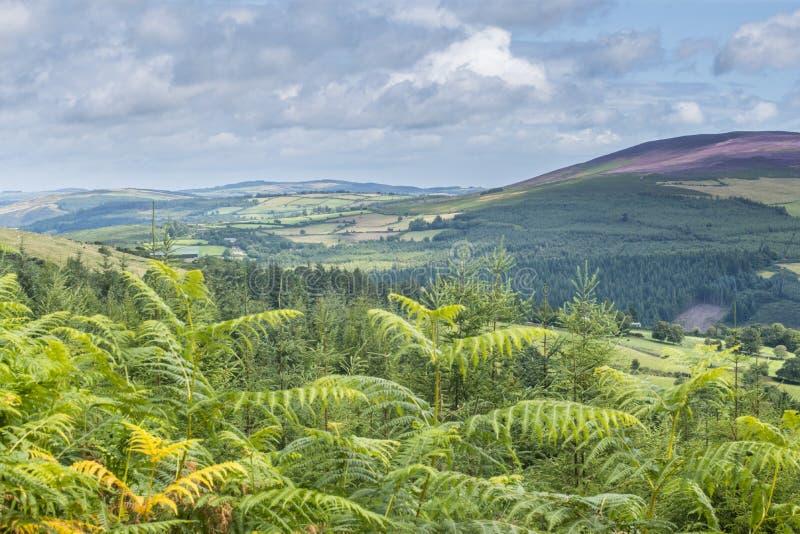 Dans les montagnes de Wicklow images libres de droits