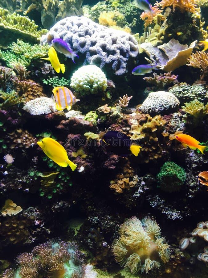 Dans les poissons profonds photos stock