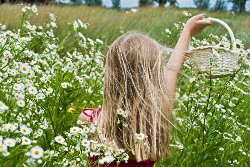 Dans les Wildflowers images libres de droits