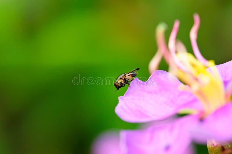 Dans met Mijn Insecten` s Voeten royalty-vrije stock afbeelding