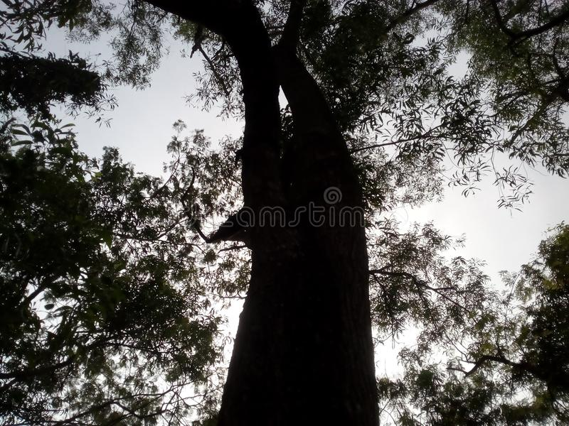 Dans un arbre et un ciel images libres de droits