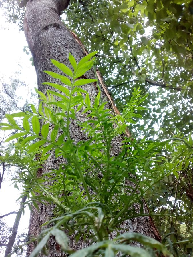 Dans un arbre et un ciel image stock