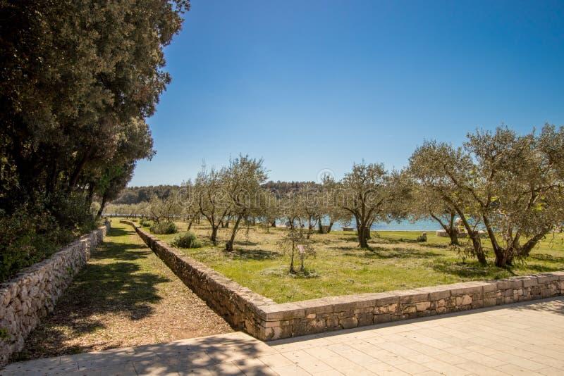 Dans un verger olive images libres de droits