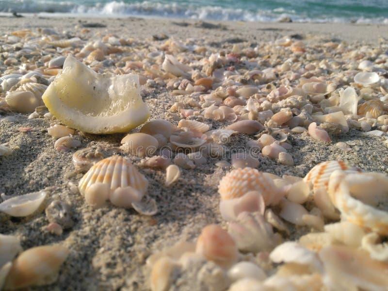 Dans une plage naturelle image stock
