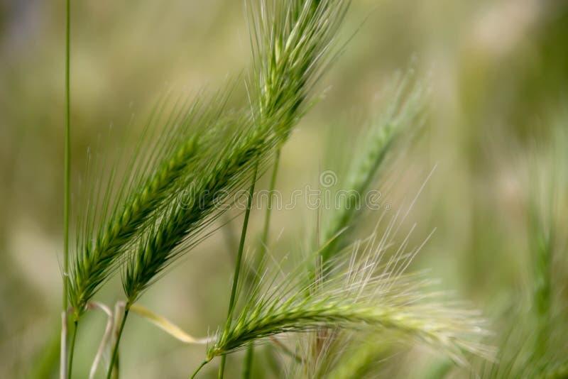Danse de culture de fibre dans le vent image stock