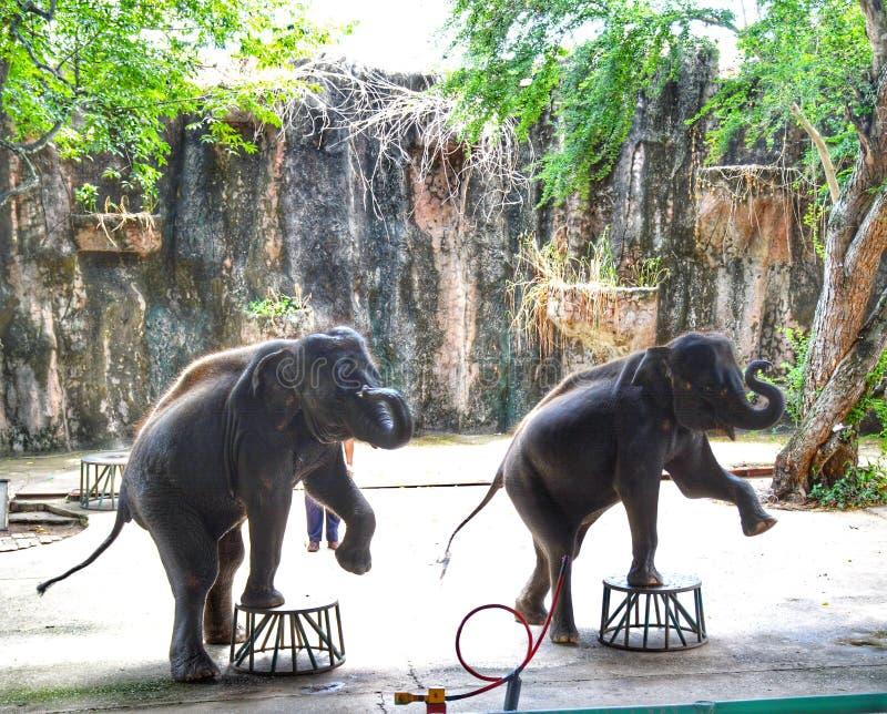 Danselefant royaltyfria bilder