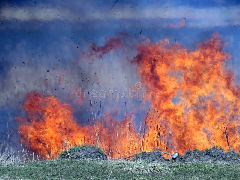 Dansen av brand arkivfoton