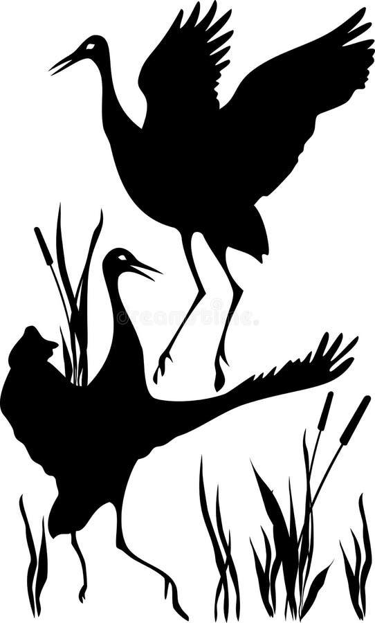 Dansende kranen stock illustratie