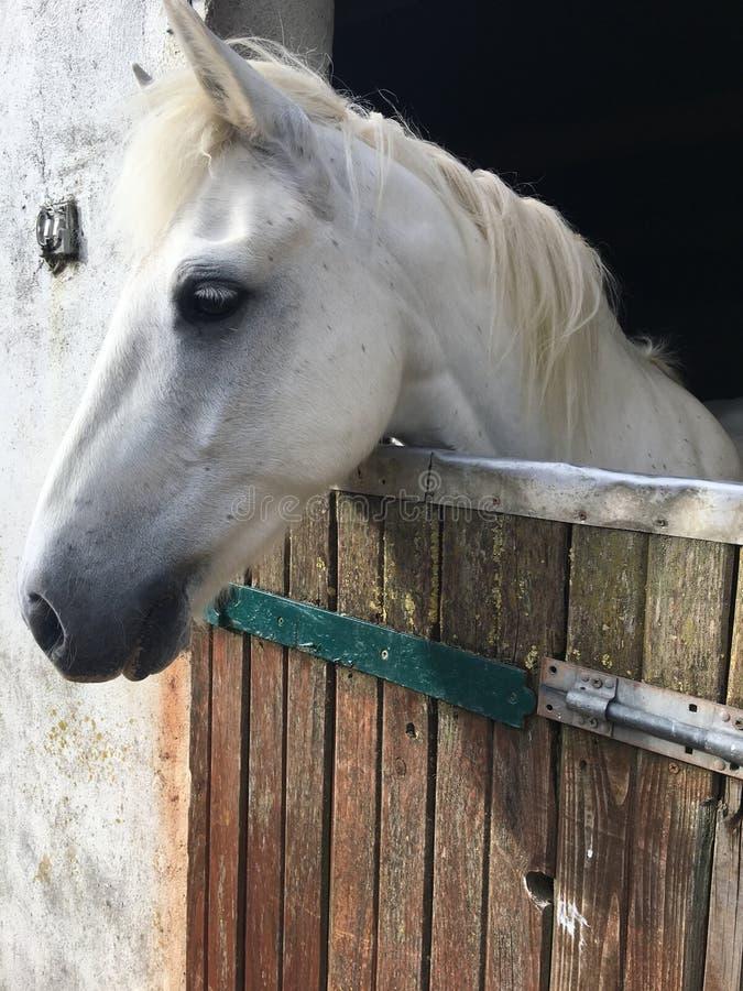 Dante. This is Dante the horse stock photos