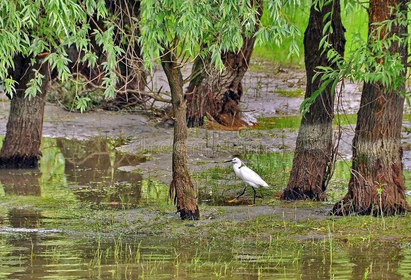 Danube delta fotografia stock