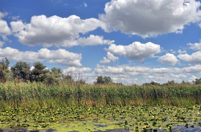 Danube delta obraz royalty free