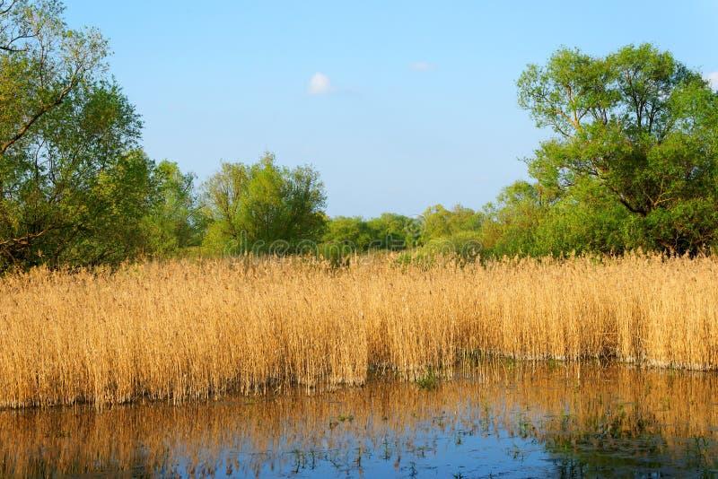 Danube Delta. Landscape in Danube Delta, Romania royalty free stock photos