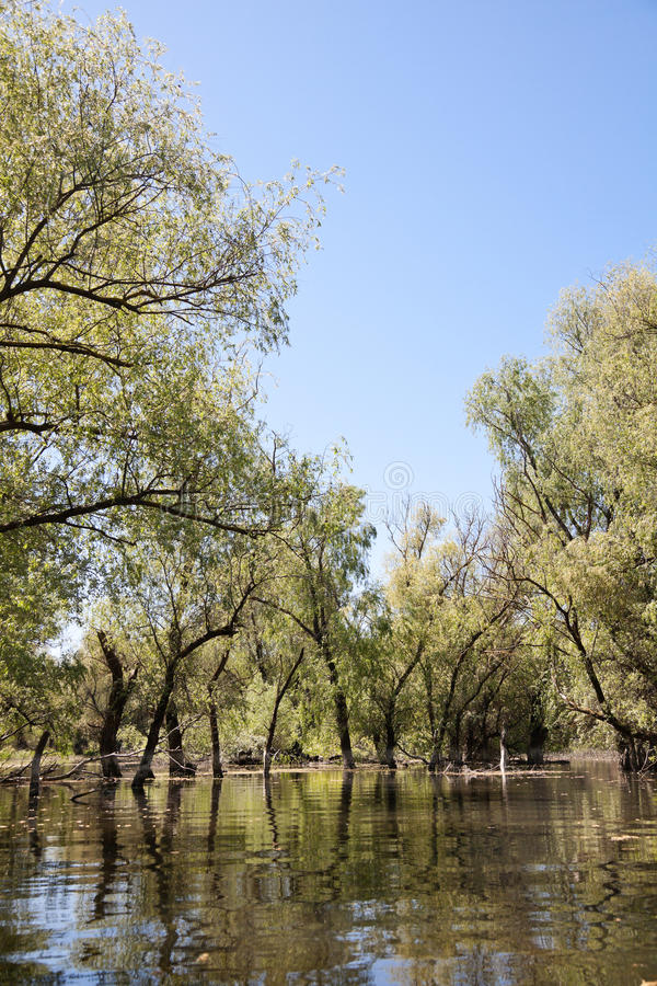 Download Danube Delta stock image. Image of romanian, wetland - 14591539