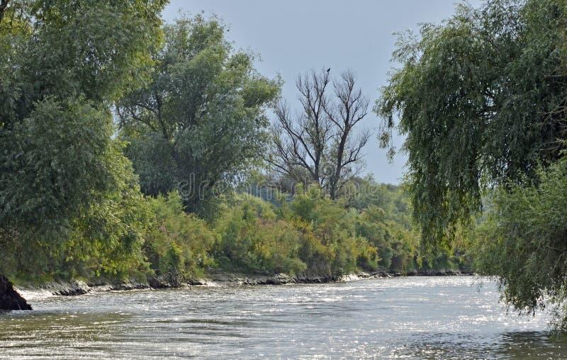 Danube delta channel stock image