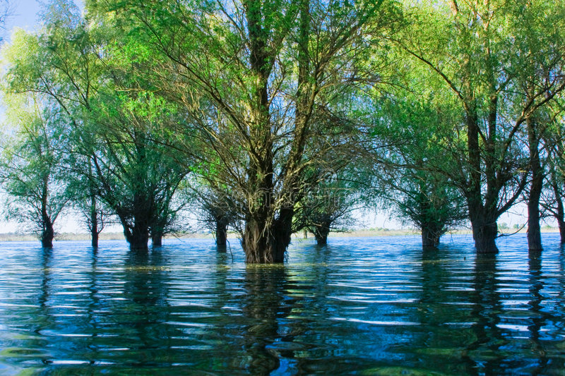 Danube Delta Flooded Forest royalty free stock image