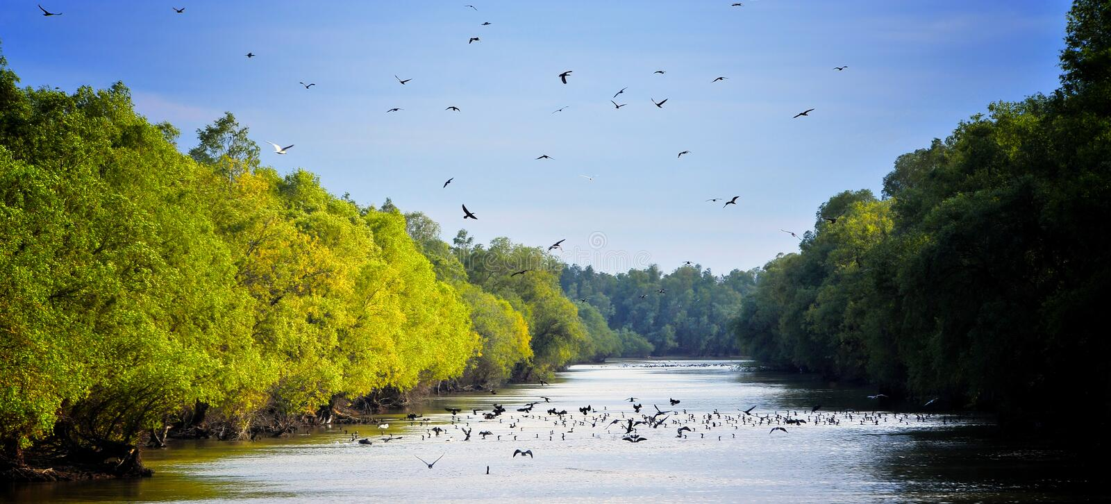 Danube Delta Landscape. With birds