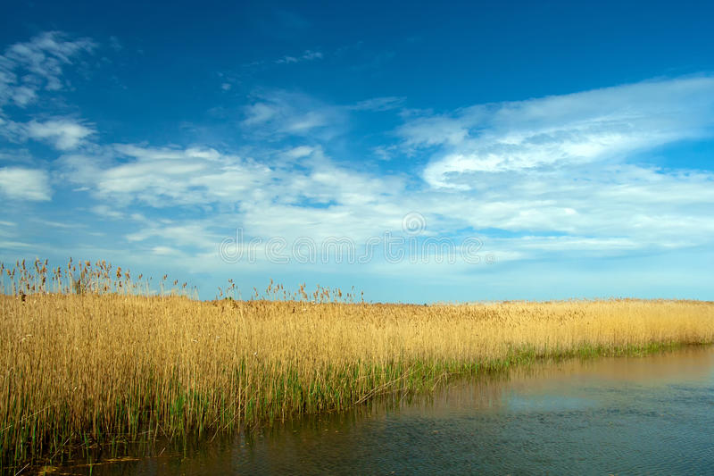 Danube delta landscape. Dry reed landscape in Danube Delta on blue sky with clouds stock photo