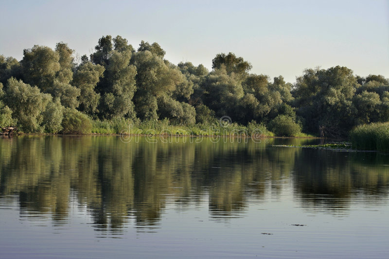 Danube Delta landscape. With trees and reeds stock photos