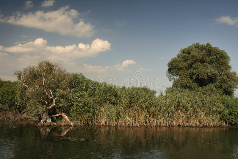 Danube Delta landscape. With trees and reeds stock image