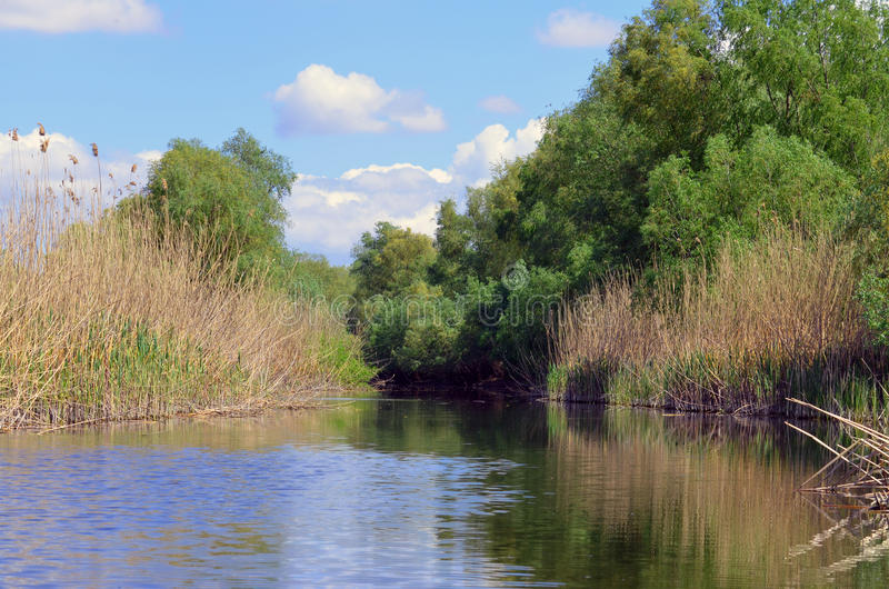 Danube Delta landscape. Lansdcape with reed, trees and river in the Danube Delta stock images