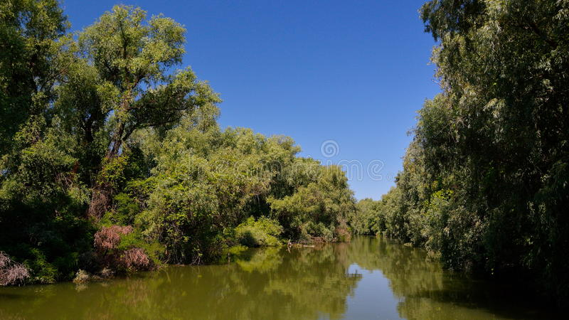 Danube delta landscape stock photography