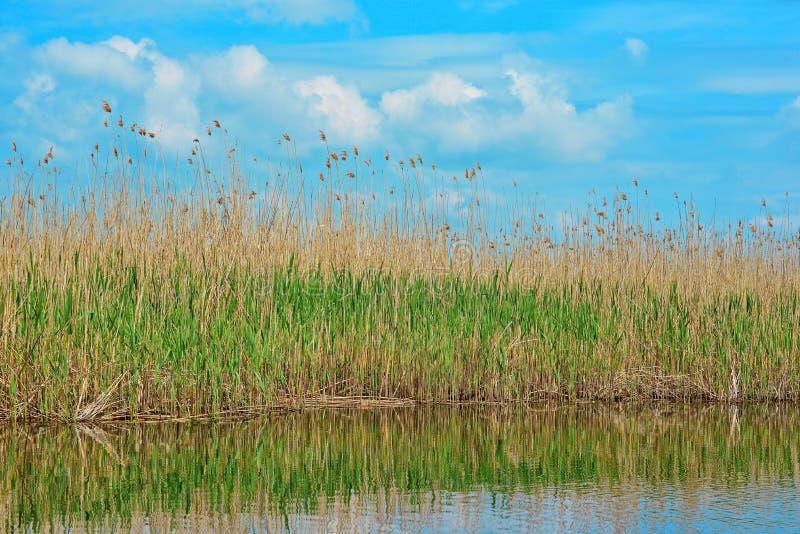 Danube Delta reed view. Super blue sky Danube Delta Landscape stock photo