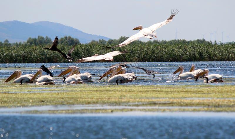 danube delta Romania zdjęcie stock