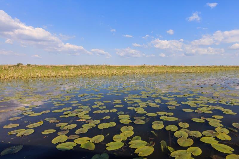 Danube Delta, Romania. Landscape in the Danube Delta, Romania royalty free stock photography