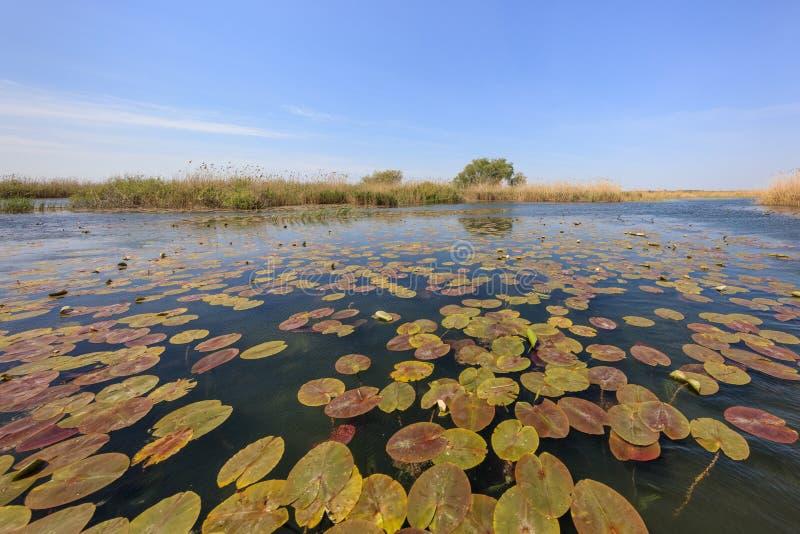 Danube Delta, Romania. Landscape in the Danube Delta, Romania, Europe royalty free stock images