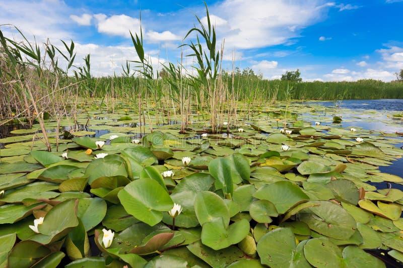 Danube delta, Rumänien arkivfoto