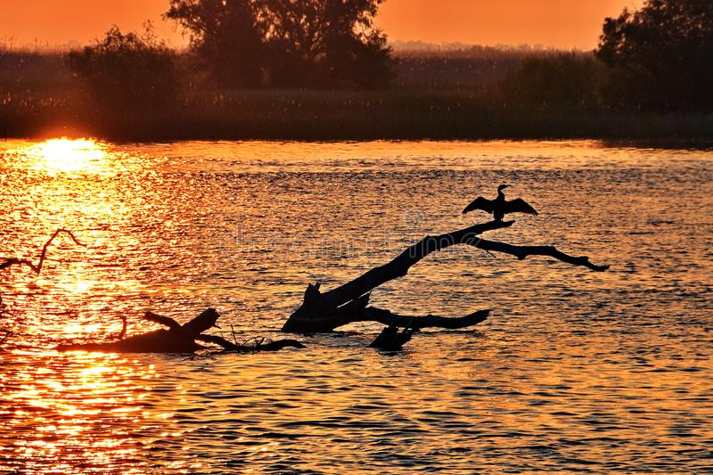 Danube Delta sunset. With a bird on a fallen tree royalty free stock images