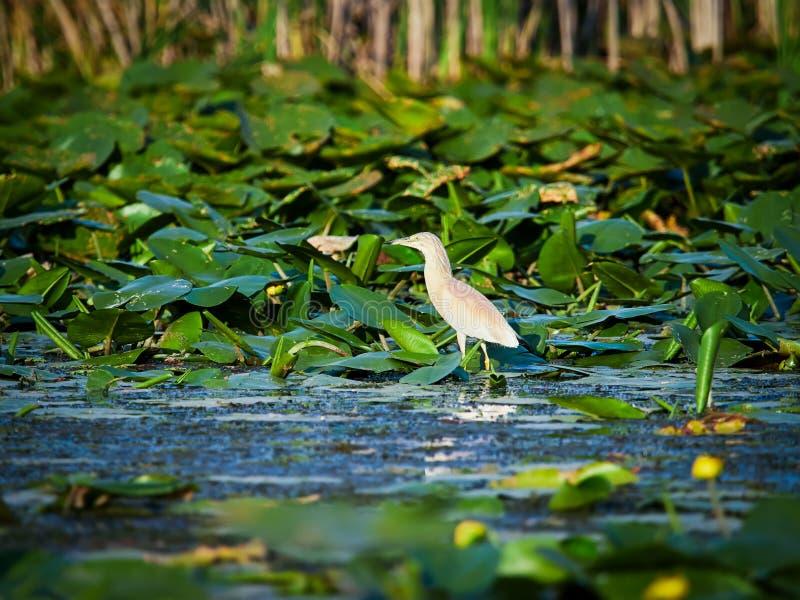 Danube Delta, Tulcea, Romania. Danube Delta in Tulcea, Romania stock photo