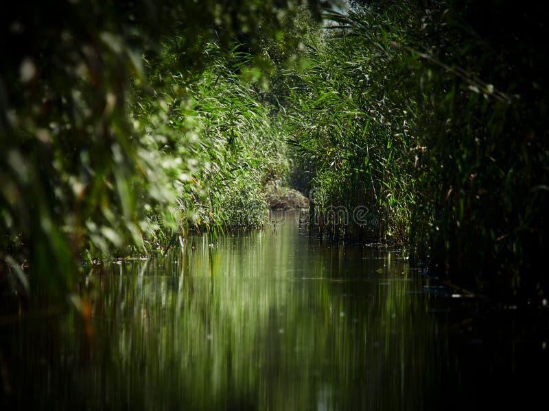 Danube Delta, Tulcea, Romania. Danube Delta in Tulcea, Romania royalty free stock photos