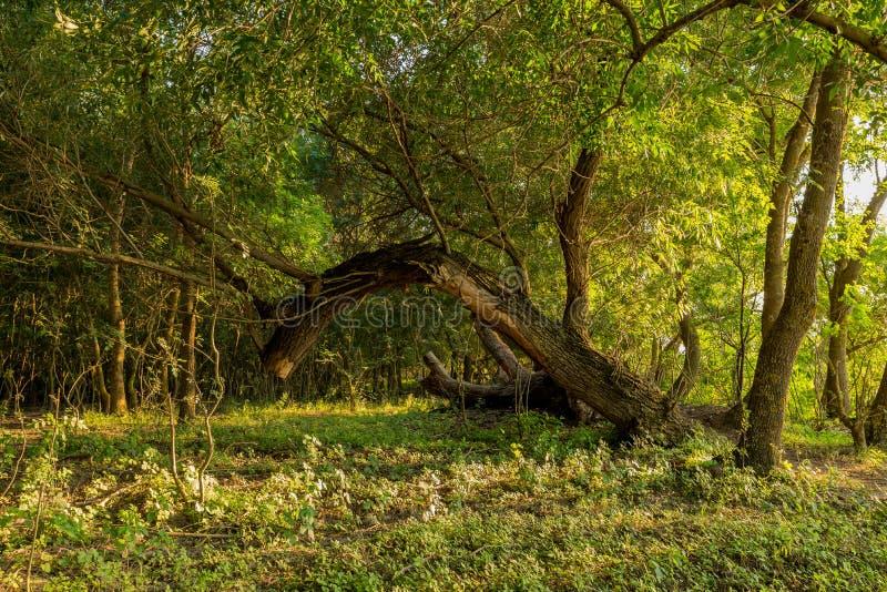 Danube delta untouched vegetation stock photography