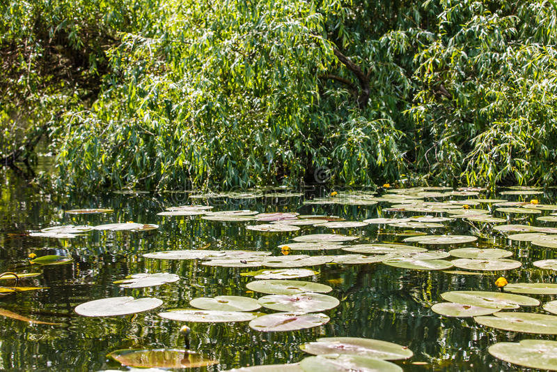 Danube Delta wilderness. Landscape photo of amazing Danube Delta wilderness stock photography