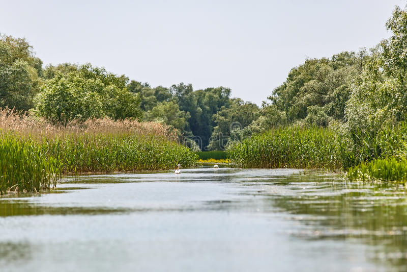 Danube Delta wildlife. Landscape photo of beautiful Danube Delta wildlife stock image