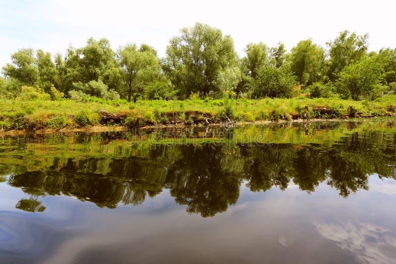 Danube delty bagna obraz stock
