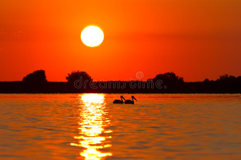 danube delty wschód słońca zdjęcie royalty free