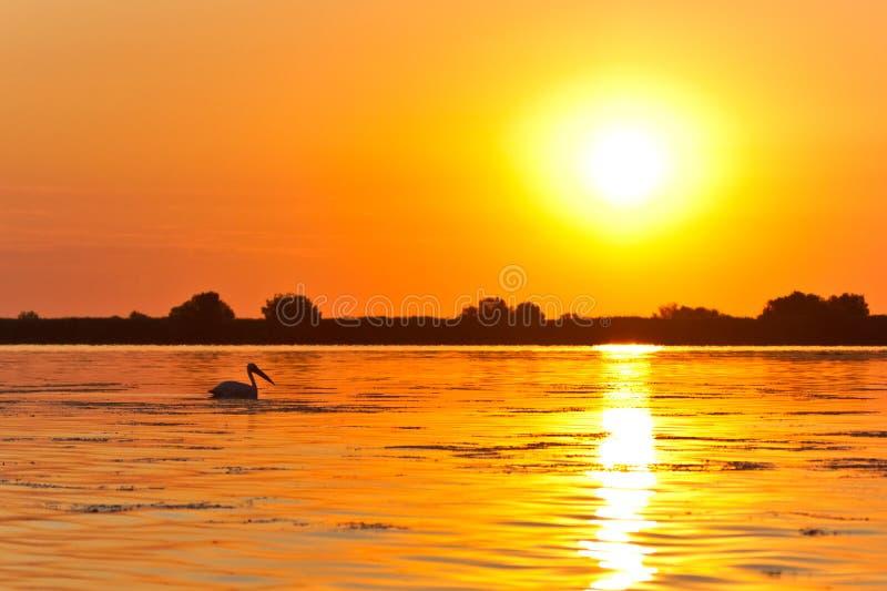 danube delty wschód słońca fotografia stock