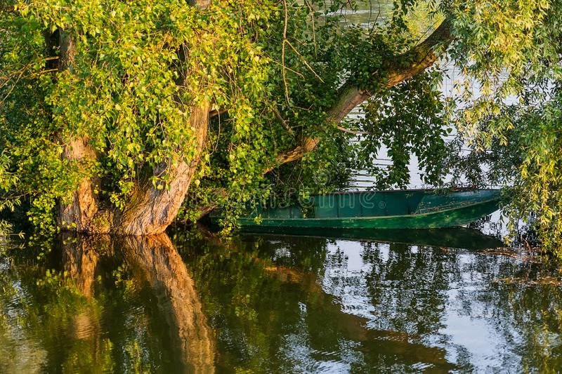 Danube island Šodroš near Novi Sad, Serbia. Parked fishing boat next to the tree in the water. royalty free stock image