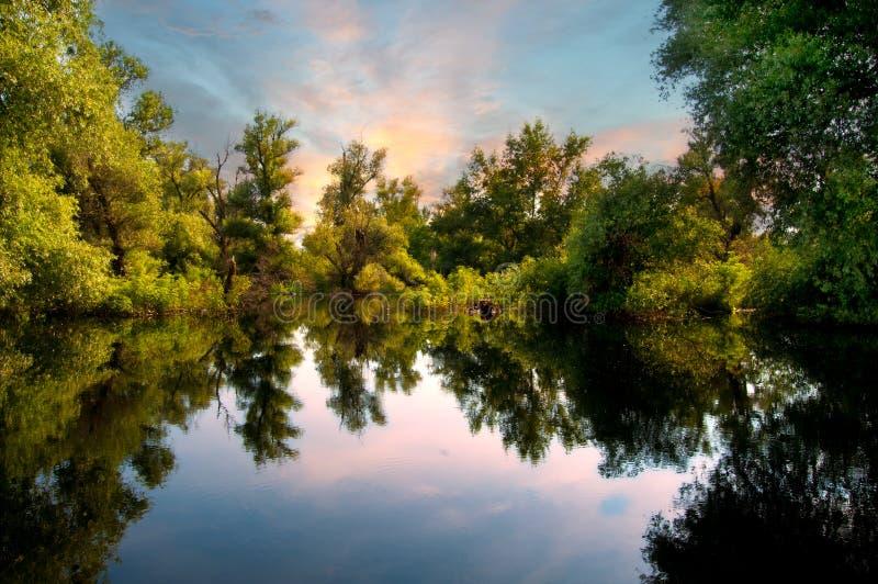 danube marshesflod royaltyfria bilder
