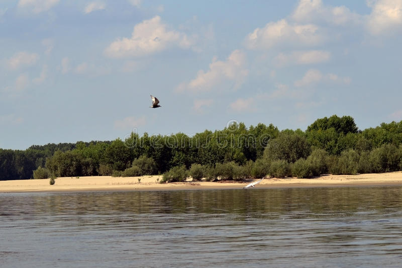 On the Danube River 3. Hot summer on the Danube river in the Calarasi area. The landscapes are unique. Sand islands, shallow and poplar forests, water birds stock photography