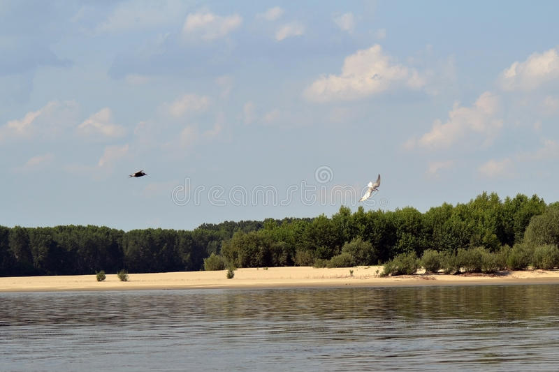On the Danube River 5. Hot summer on the Danube river in the Calarasi area. The landscapes are unique. Sand islands, shallow and poplar forests, water birds stock photo