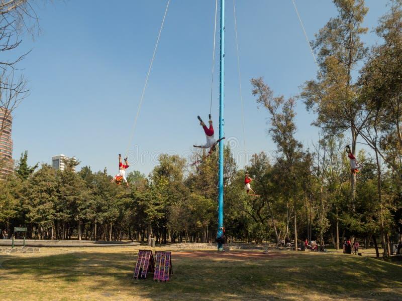Danza de los Voladores Dansa av reklambladen, Palo Volador flygpol, ceremoni, ritual royaltyfri foto