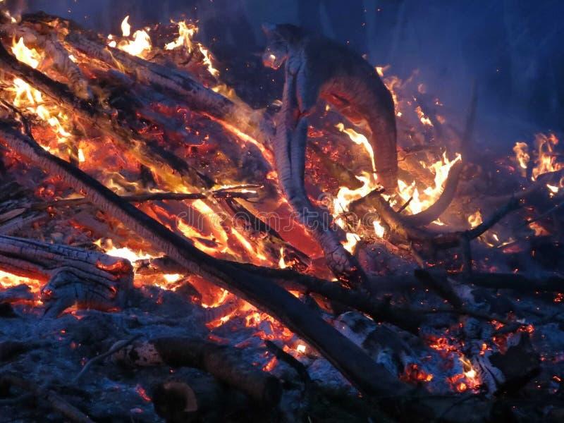 Danza del fuego imágenes de archivo libres de regalías