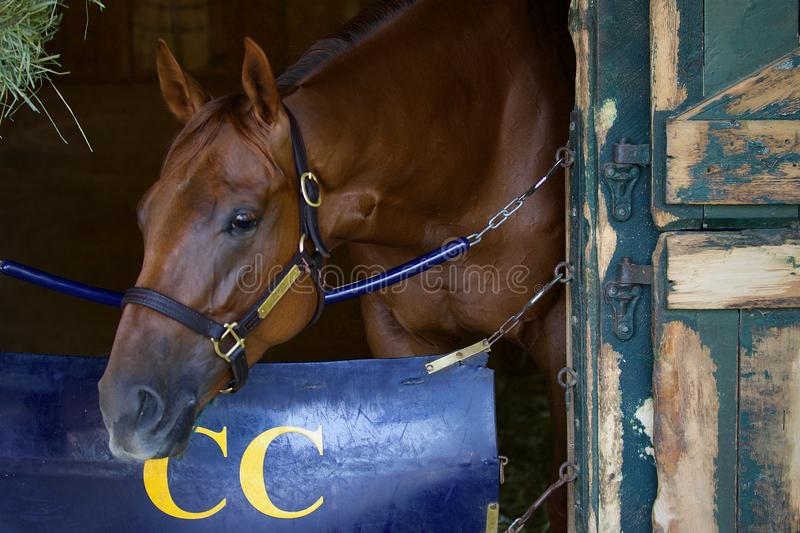 Danza-Irish-Ridge Chestnut Two Year Old Filly. This talented chestnut filly, Irish Danzing, is by freshman sire Danza out of a winning Cactus Mare dam, Irish stock photos