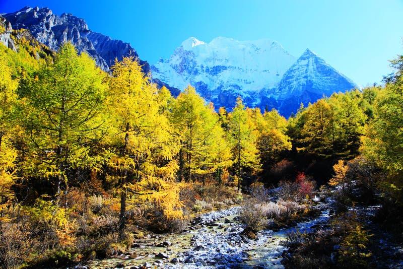 Daocheng Yading, ein Naturreservat der nationalen Ebene in China stockfotografie