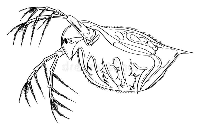 Daphnia vektor illustrationer
