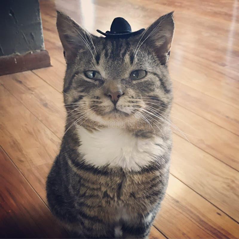 Dapper. Cat feeling dapper with a hat stock photos